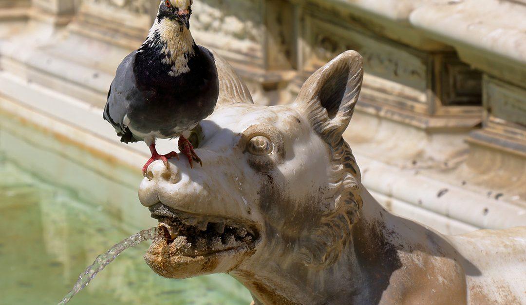 Você é a pomba ou a estátua?