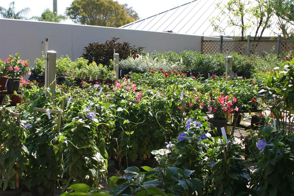 Garden-Center-3-w