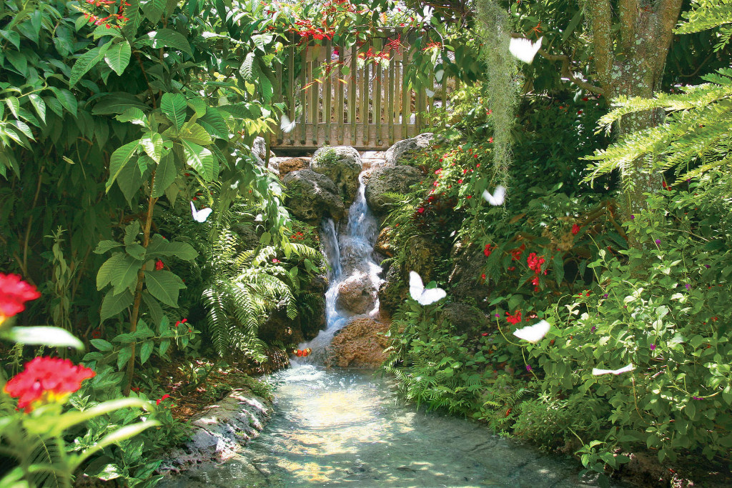 waterfall-with-white-morphos-w