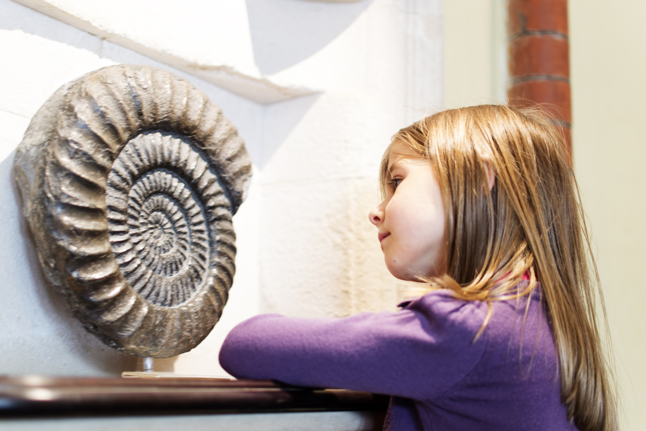 A young girl looks at an ammonite on display in a museum [url=search/lightbox/13598504#9fa3735]Students and studying lightbox[/url]