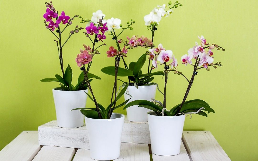 7 Dicas para ter orquídeas em casa