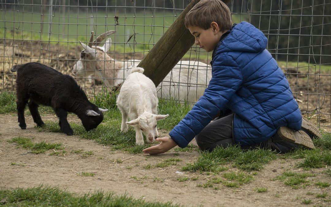 7 dicas – Lugares para interagir com animais